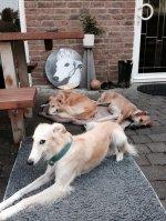 Sira's Freunde bei uns auf der Terrasse