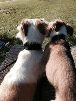wir sind jetzt Freundinnen und haben die Ohren schön